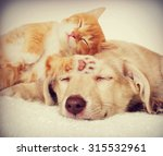 Stock photo kitten and puppy sleeping 315532961