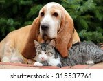 Stock photo cat and dog 315537761