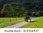 Horse Ride In Killarney...