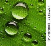 Water Drops On Fresh Green Lea...