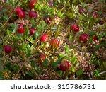 Cranberries Red Berries...
