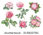 watercolor illustrations of... | Shutterstock . vector #315820781