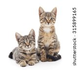 Two Kittens Isolated On A Whit...