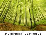 summer fog in the forest | Shutterstock . vector #315938531