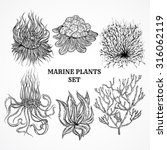 collection of marine plants ... | Shutterstock .eps vector #316062119