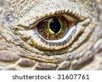 komodo dragon eye   Shutterstock . vector #31607761