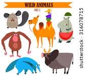 vector set wild animals in... | Shutterstock .eps vector #316078715
