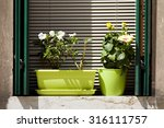 Flowers On Windowsill In Front...
