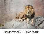 Male Lion Sitting On The Big...