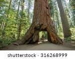 man standing looking at giant... | Shutterstock . vector #316268999