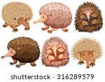 Brown And Pink Echidnas On...