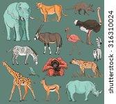 hand drawn animal planet... | Shutterstock . vector #316310024