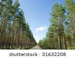 forest tracks   Shutterstock . vector #31632208