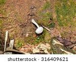 Small photo of TRICHOLOMATACEAE, mushroom