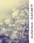 winter landscape.winter scene ... | Shutterstock . vector #316418879