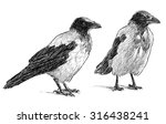 sketches of the crows | Shutterstock . vector #316438241