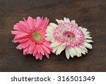 pink chrysanthemum flower... | Shutterstock . vector #316501349