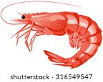 cooked shrimp illustration in... | Shutterstock .eps vector #316549547