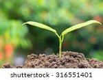 plant a seedling little tree | Shutterstock . vector #316551401