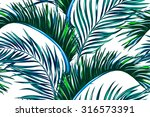 tropical palm leaves  tree... | Shutterstock .eps vector #316573391