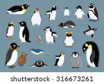 Various Penguins Cartoon Vecto...