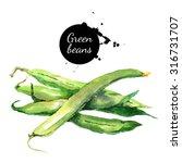 Green Beans. Hand Drawn...