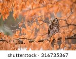 Owl In Autumn Leaves