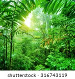 fresh green rainforest  summer... | Shutterstock . vector #316743119