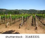 Attractive vineyard in Northern California's Napa Valley. - stock photo