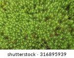 A Macro Closeup Of Green Bear...