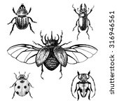 Hand Drawn Beetles Set. Black...