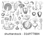 set vegetables and herbs.... | Shutterstock .eps vector #316977884