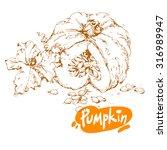 hand drawn sketch of pumpkin... | Shutterstock .eps vector #316989947