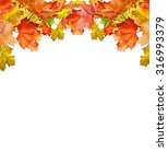 autumn leaves isolated on white ... | Shutterstock . vector #316993379