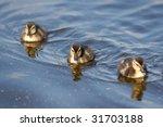 Three Duckling On  A Pond