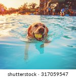 Stock photo a cute dog at a local public pool toned with a retro vintage instagram filter app or action effect 317059547