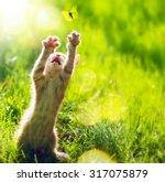 great love the cute little... | Shutterstock . vector #317075879