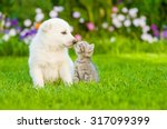 Kitten Kissing  White Swiss...