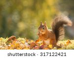 red squirrel standing with... | Shutterstock . vector #317122421