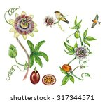 realistic illustration of... | Shutterstock . vector #317344571