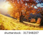 birch forest in sunny afternoon ... | Shutterstock . vector #317348207