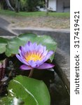 a beautiful waterlily or lotus... | Shutterstock . vector #317419421