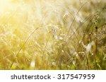 green summer plants with dew... | Shutterstock . vector #317547959