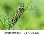 caterpillar of the papilio... | Shutterstock . vector #317708321
