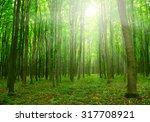 sun beam in a green forest | Shutterstock . vector #317708921