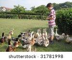 boy feed ducks