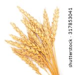 wheat isolated on white...   Shutterstock . vector #317853041