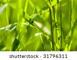 grass background closeup | Shutterstock . vector #31796311