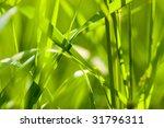 grass background closeup | Shutterstock . vector #31796311