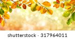 colorful autumn beech leaves... | Shutterstock . vector #317964011